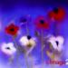 Patricia Rayner ABIPP (www.image2photo.co.uk)